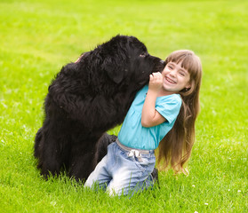Newfoundland dog kisses a girl