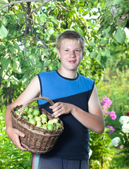 The boy, the teenager with a basket of apples in a garden.