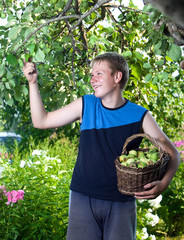 the teenager with a basket of apples in a garden