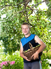 The boy, the teenager with a basket of apples in a garden