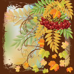 Autumn card with red rowan berry and maple leaves, vector