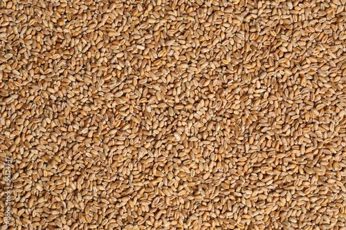 Leinwandbild Motiv Weizen Hintergrund