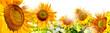 Obrazy na płótnie, fototapety, zdjęcia, fotoobrazy drukowane : kwiaty