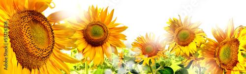 Plexiglas Zonnebloemen kwiaty