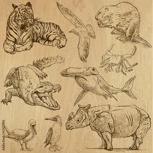 Animals around the World (part 5). Collection of hand drawings.