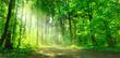 Leinwanddruck Bild - Waldweg mit Sonnenschein