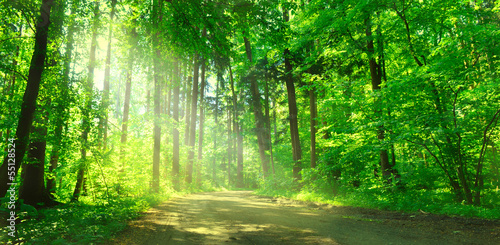 canvas print picture Waldweg mit Sonnenschein