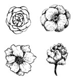 Set of hand drawn vector flowers.