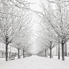 snow tree on Kampa island, Prague
