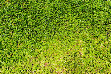 Natural background - green grass texture
