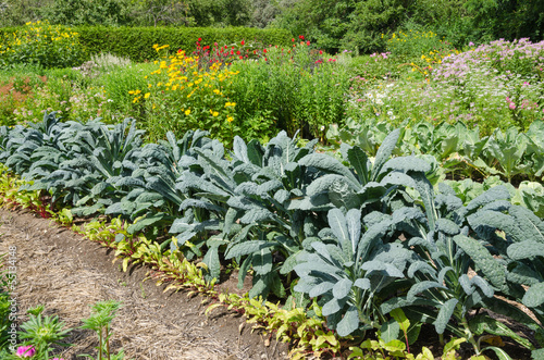 Vegetable Garden with kale
