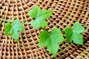 Green ivy leaves on wood background.