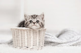 Kitten in a basket - 55143348