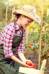 Pretty female putting ripe tomato into bucket in the garden