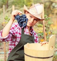 Close-up of woman gardener holding grape and wood bucket