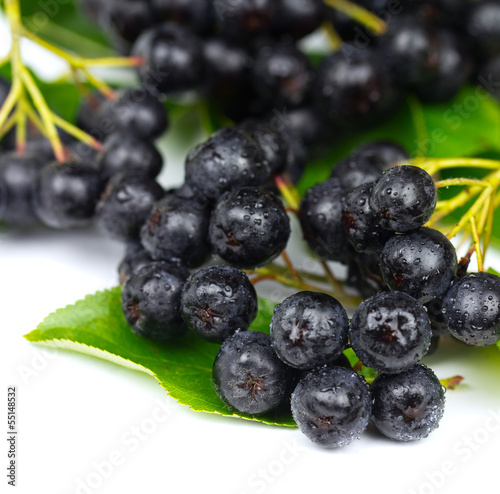 canvas print picture Aronia Beeren