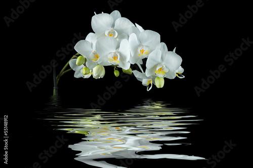 fototapete wei e orchidee mit spiegelung auf schwarzem. Black Bedroom Furniture Sets. Home Design Ideas