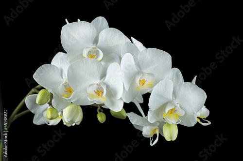 fototapete wei e orchidee auf schwarzem hintergrund. Black Bedroom Furniture Sets. Home Design Ideas