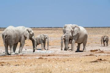 elefanten mit weissem schlamm bedeckt