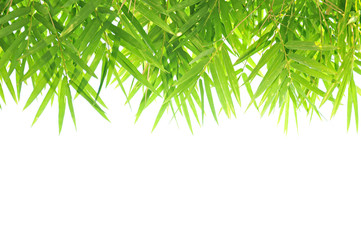 Bamboo leaf background - border design