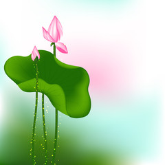 Pink Lotus Flower on Green Background