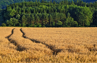 Ruts in the field with ripe grain