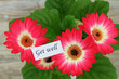 Get well card with red gerbera daisies
