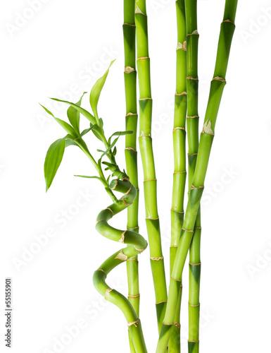 bambus-szesc-lodyg
