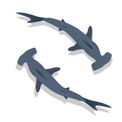 Hammer sharks