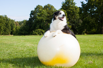 Dog on Yoga Ball