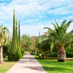 beautiful alley with palm trees and cypresses