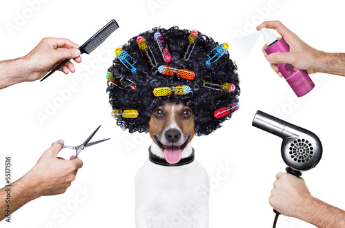 canvas print picture hairdresser  scissors comb dog spray