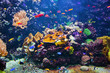Leinwanddruck Bild - Underwater scene with fish, coral reef