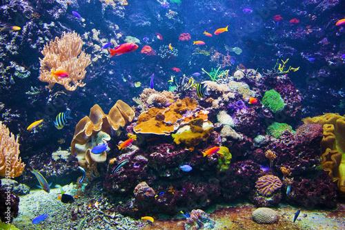 Underwater scen... Underwater Fish Scene