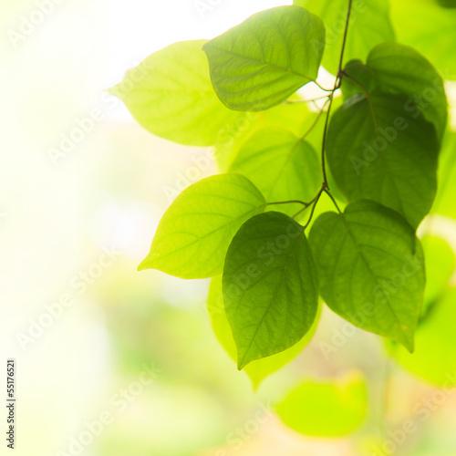 zielone-liscie