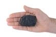 Steinkohle auf einer Hand  freigestellt