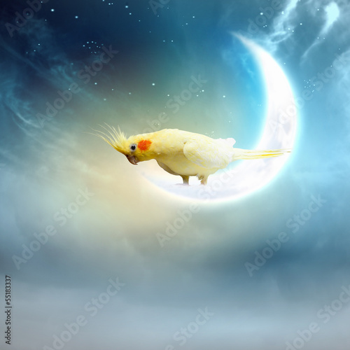 Parrot sitting on moon