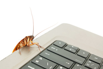 Cockroach climbing on keyboard to present computer attacked