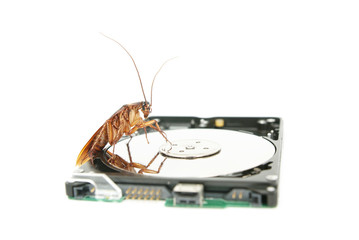 Cockroach climbing on hard disk to present computer attacked