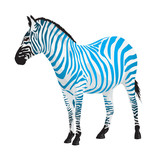 Zebra with strips of blue color.