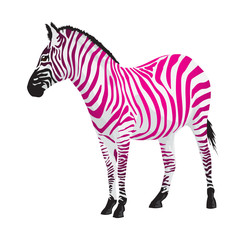 Zebra with strips of pink color.