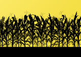 Fototapety Corn field detailed countryside landscape illustration backgroun
