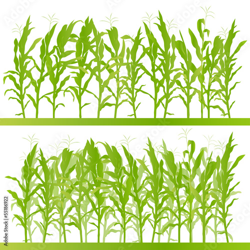 Corn field detailed countryside landscape illustration backgroun