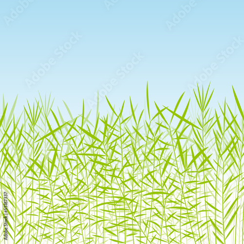 Grass, reed and wild plants detailed silhouettes illustration ba