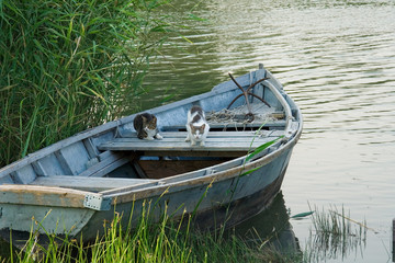 Cats in a fishing boat