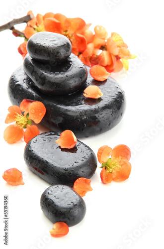 zdrojow-kamienie-i-kwiaty-odizolowywajacy-na-bielu