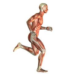 Muskelaufbau Mann beim laufen