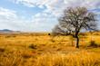 wildnis savanne - 55197370