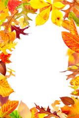 Multi colored autumn leaves frame isolated on white