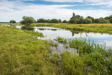 Rural landscape in summertime